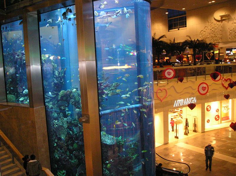 [Image: 800px-Kaunas%2C_Mega_aquarium.jpg]