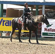 Photo d'un Kentucky Mountain Saddle Horse monté par un cavalier.