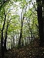 Khalep'ya, Kyivs'ka oblast, Ukraine, 08741 - panoramio (6).jpg