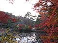 Kobe Municipal Arboretum in 2013-11-16 No,19.JPG