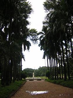 Kolkata botanical garden pathway.jpg