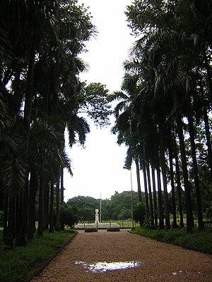 Acharya Jagadish Chandra Bose Indian Botanic Garden - Image: Kolkata botanical garden pathway