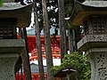 Konpon Daito Pagoda through Trees - Garan Complex - Koyasan - Japan (47956864451).jpg