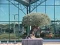 Kutter Pflanzen - panoramio.jpg