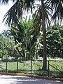 Lagos Parque del Este 008.JPG