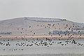 Lake Burrumbeet (24155551084).jpg