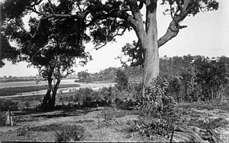 Lake Monger - Wooded foreshore of Lake Monger c.1914