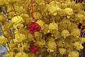 Lalbagh flowershow August 2011 7435.JPG
