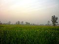 Landscape (Prade) - panoramio (1).jpg