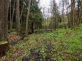Landschaftsschutzgebiet Hermannstal Nr. 41, 3 WDPA ID 321564 Sublocation DE-TH.jpg