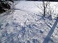 Late Afternoon Snowshoeing, Charlottetown, PEI (16894911636).jpg