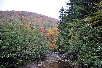 Laurel Fork (Cheat River tributary) - Laurel Fork at Laurel Fork Recreation Area