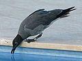 Lava Gull RWD4.jpg