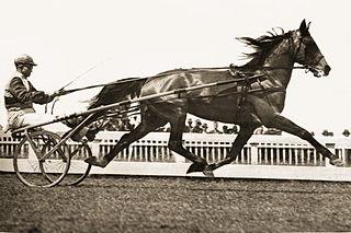 Lawn Derby Australian Standardbred racehorse