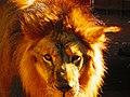 Leão - panoramio (3).jpg