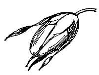 Lear 3 - Nut.jpg