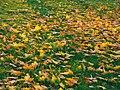 Leaves (183526585).jpeg