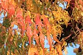 Leaves from the Branch (6278253796).jpg