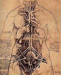 Leonardo da vinci, Drawing of a Woman's Torso.jpg