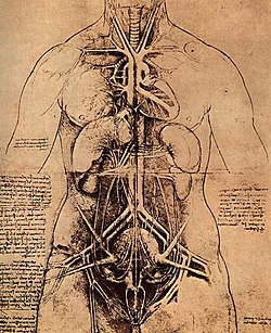 Leonardo da vinci, Drawing of a Woman's Torso.jpg