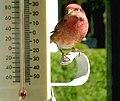 Les oiseaux a Jeannine - panoramio.jpg