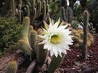 Lightmatter cactusflower