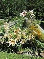 Lilies (28516040800).jpg