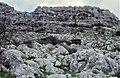 Limestone Formations (36608528815).jpg