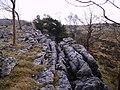Limestone Pavement - geograph.org.uk - 336105.jpg