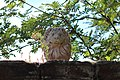 Lion on gates of Thurstaston Hall cu.jpg