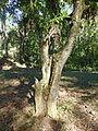 Lomas de Banao-Calebassier.jpg