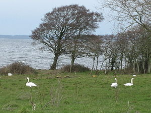Lough Neagh - Image: Lough Neagh geograph.org.uk 126920