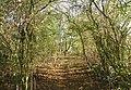 Lumby Lane - geograph.org.uk - 593187.jpg