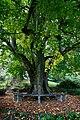 Luzern Villa Bellerive tree.jpg