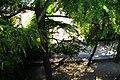 MADRID VERDE PALACIO REAL DE MADRID JARDINES DE SABATINI VISITA COMENTADA - panoramio.jpg
