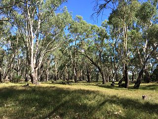 Murrumbidgee Valley National Park Protected area in New South Wales, Australia