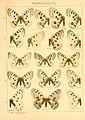 Macrolepidoptera01seitz 0033.jpg
