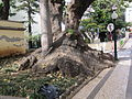 Madeira em Abril de 2011 IMG 1736 (5663191329).jpg