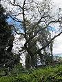 Madeira em Abril de 2011 IMG 1825 (5663689219).jpg
