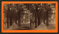 Madison Square, Savannah, Ga, from Robert N. Dennis collection of stereoscopic views.png