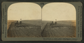 Making a good seed bed - tractor drawing double disc and three section tooth-harrows, S. Dak, by Keystone View Company.png