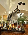 Mandschurosaurus Amurensis..2H1A0981WI.jpg