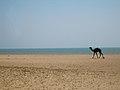 Mandvi Beach2.jpg