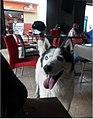 Marinilla Colombia - Street Dogs Perros Callejeros 02.jpg