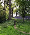 May Dynefwr Park - geograph.org.uk - 1281738.jpg