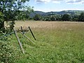 Meadow near Warren Farm - geograph.org.uk - 526099.jpg