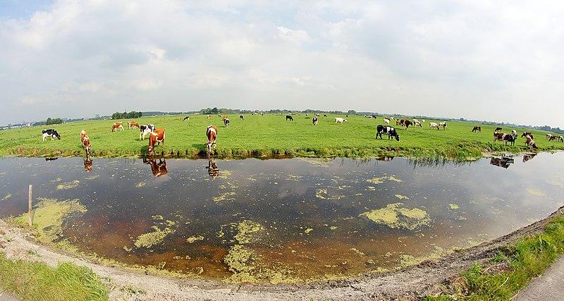 File:Midden Delfland (29210200174).jpg