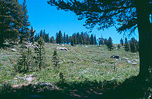 Mokelumne Wilderness.jpg
