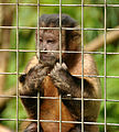 Monkey Sanctuary 6.jpg