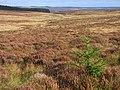 Moorland above Kielder - geograph.org.uk - 1546666.jpg